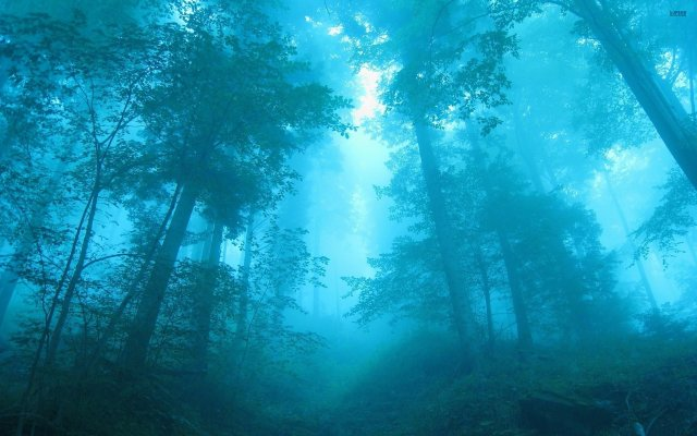 forest-fog-tree-light